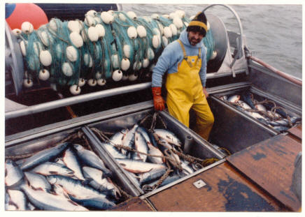 Douglas with 8000 lbs of Sockeye Salmon, Egigik River, Bristol Bay Alaska